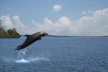 Small-Group Dolphin-Watching Cruise...