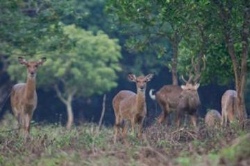 Private Tour Cuc Phuong National Park...