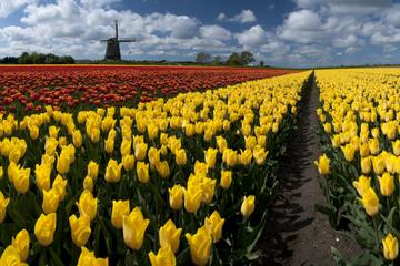 Dagsrundtur på landsbygden med nederländska väderkvarnar från ...