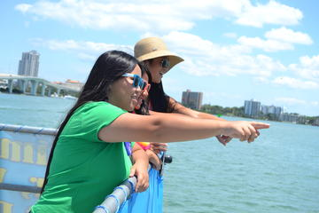 Book Clearwater Dolphin-Watching Tour on Viator