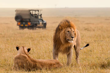 15-Day South Africa Uncovered: Kruger and Garden Route from Jo'burg...