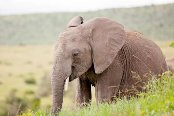 2 días de safari de fauna y flora a...