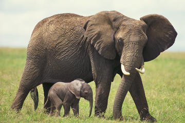 2 días de safari fotográfico privado en Western Cape desde Ciudad del...