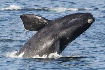 2-Day Whale Coast and Winelands Guided Tour from Cape Town