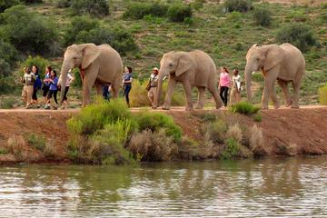 2-tägige südafrikanische geführte Wildtiersafari ab Kapstadt