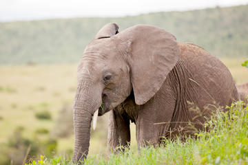 2-tägige Western Cape Tierwelt-Safari...