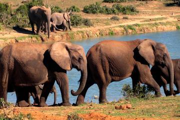 5-daagse Garden Route Adventure met Addo Safari-tour met gids vanuit ...