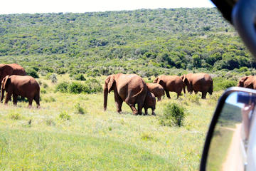 8-Day Garden Route Guided Tour: Cape Point, Cape Winelands and Addo...
