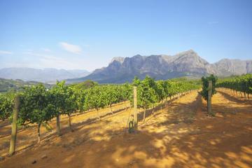 Excursão de Degustação na Região Vinícola de Stellenbosch saindo da...