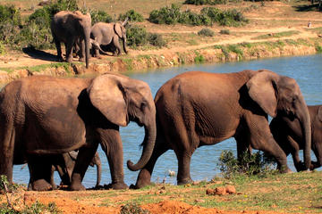 Excursão guiada de cinco dias para Garden Route com a Addo Safari...