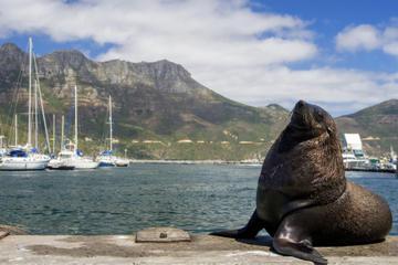 Excursión de un día a Hout Bay, península del Cabo y Boulders Beach...
