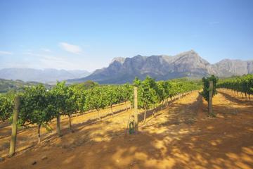 Excursion avec dégustation dans les vignobles de Stellenbosch, au...