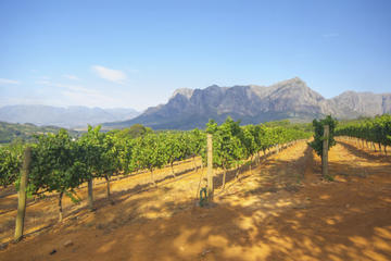 Ruta de catas de Winelands...