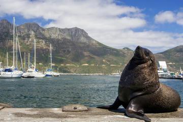 Viagem diurna para Hout Bay, Península do Cabo e Pinguins de Boulders...