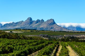 Visite privée : dégustation de vin à Stellenbosch, Franschhoek et...