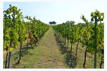 Chianti Wine and Vinci Group Tour from Viareggio