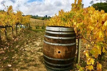 Chianti Wine and Vinci half day Tour from Lucca
