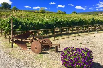 Chianti Wine and Vinci half day Tour...