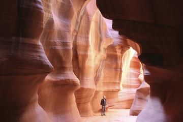 Excursion hivernale de 3jours dans les parcs nationaux: Grand...