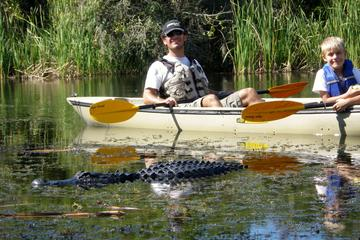 Day Trip Everglades National Park Kayak Eco Tour from Naples near Naples, Florida