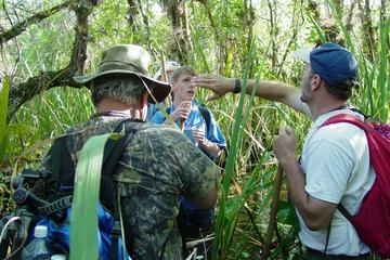 Guided Everglades Swamp Walking Tour