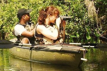 Ruta ecoturística al bosque de Manglares en kayak en los Everglades...