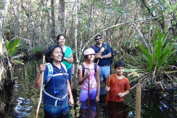 Small-Group Tour: Florida Everglades...