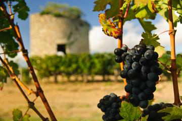 Supersparpaket Bordeaux: Gourmet-Spaziergang mit Mittagessen plus...