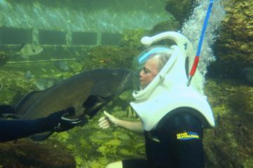 Experiencia de buceo con casco bajo el agua en el Miami Seaquarium