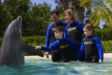 Spelen en zwemmen met dolfijnen in het Miami Seaquarium