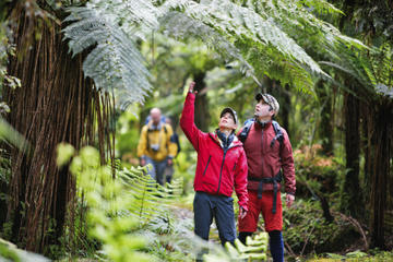 3-Day Hollyford Track Guided Walk with Scenic Helicopter Flight