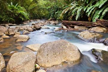 Small-Group Hiking Adventure through Grand Etang National  Park in...