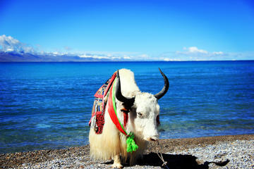4-Day Lhasa and Lake Namtso Private...