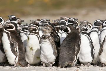 Excursión terrestre en Puerto Madryn: Excursión privada de un día a...