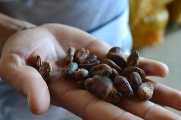 From Cacao to Chocolate: Private Tour in Manta