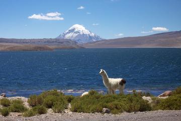 Private Trip Around Arica and Lauca National Park