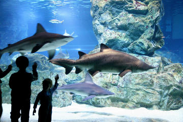 COEX Aquarium Discount Ticket