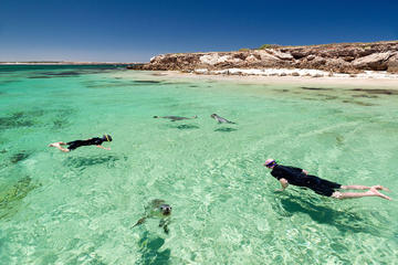 3 Day Eyres Wild West Coast Small Group Tour from Adelaide
