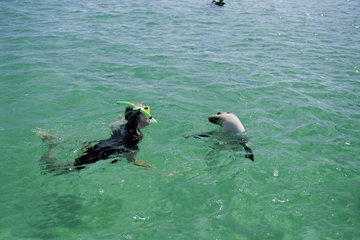 3-tägiges Wildlife-Abenteuer auf der Eyre-Halbinsel mit optionalem...