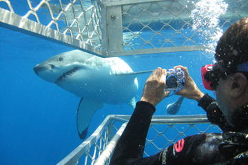 4-Day Port Lincoln to Ceduna Experience the Edge Tour Including Shark...