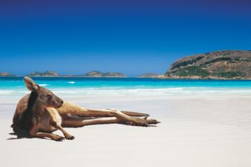 6-Day Camping Tour from Perth: Esperance, Stirling Ranges and...