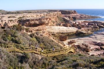 6-tägige Tour zur Eyre Halbinsel in kleiner Gruppe - Camping-Ausflug...