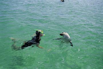 Aventura para conocer la fauna y flora de la Península de Eyre...