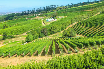 Viator VIP: Cape Winelands Meal and...