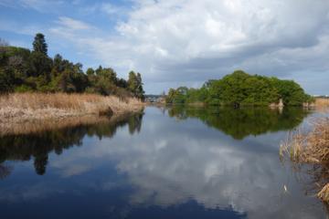 Excursão de Bicicleta ao Boyd Hill Nature Preserve, saindo de São...