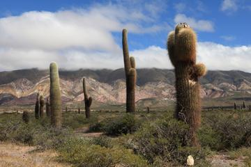 2-Day Calchaquí Valley Tour to Cachi and Cafayate