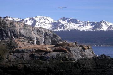 Beagle Channel Yacht Sailing Tour from Ushuaia