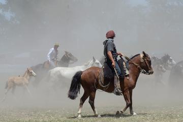 Buenos Aires Shore Excursion: Gaucho Day Trip to Santa Susana Ranch