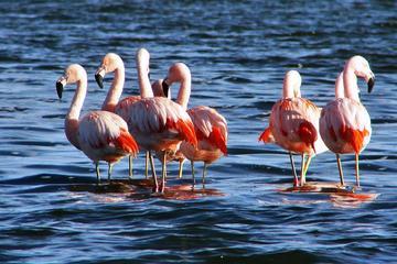 Bull Lagoon and Flamingos Watching 4x4 Tour