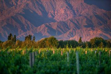 Cafayate Wine Route Day Tour from...